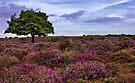 Dunwich Heath Suffolk by Darren Burroughs