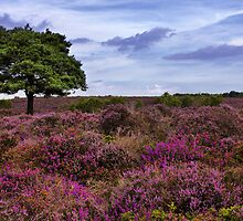 Dunwich Heath Suffolk by Darren Burroughs