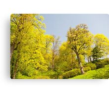 Green spring trees view Canvas Print