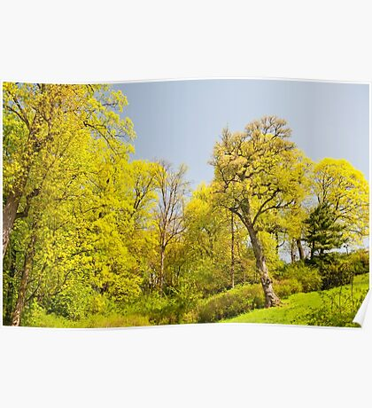 Green spring trees view Poster