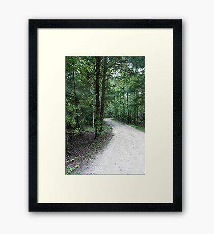 Thru the Florida Woods Framed Print