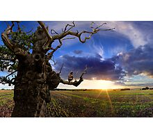 Old Tree at Sunset Photographic Print