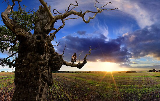 Old Tree at Sunset by Phil Brown