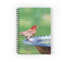 Colorful Finch Spiral Notebook
