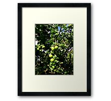 Juicy Apples  Framed Print