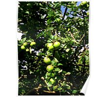 Juicy Apples  Poster