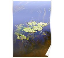 Water Lily with Underwater Detail Poster