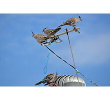 Pigeons on the television Photographic Print