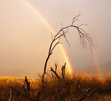 Rainbow Magic - Catalina State Park by jackandpat