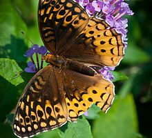 Great Spangled Fritillary by Yvonne Roberts
