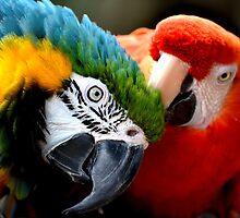 Preening Macaws by Fraida Gutovich
