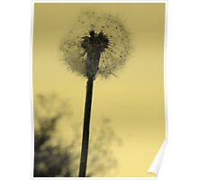 Dandelion in Muted Yellow Poster