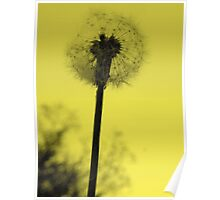 Dandelion in Bright Yellow Poster