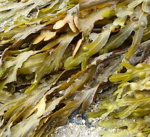 Seaweed.......pure and simple. by Fara
