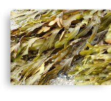 Seaweed.......pure and simple. Canvas Print