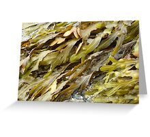 Seaweed.......pure and simple. Greeting Card