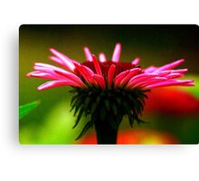 Silky Cone Flower Canvas Print