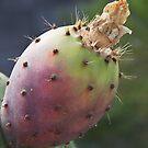 Cactus Study #1 by Heather Friedman