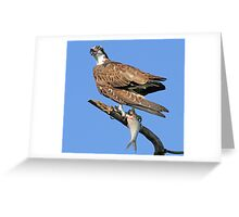 Osprey with catch(Licking my lips in anticipation!) Greeting Card