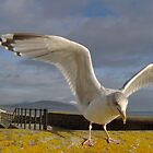 Seagull trying to pinch our chips..Lyme Regis-Dorset by Rollergirl