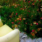 Empty Chair And Thistles. by Fuschia