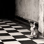 Kitten at S-21 by Suzanne Gordan