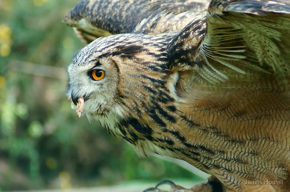 Eagle Owl Ready for Take Off by James Howell