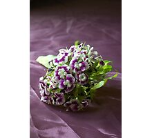 All things bright and purple  Photographic Print