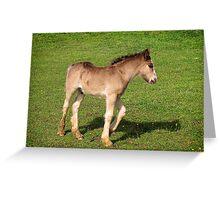 Foal Greeting Card