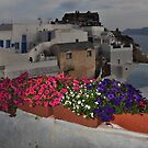 Flowerboxes in Oia by Peter Hammer