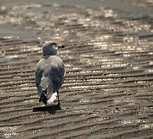 A walk on the beach. by Nathalie Chaput