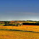 Golden Fields by Larry Trupp