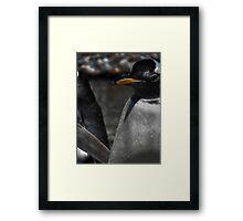 Penguin, Edinburgh Zoo Framed Print