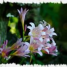 082111-9  ALONG A FOREST PATH by MICKSPIXPHOTOS