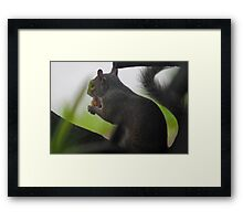 A Squirrels' Dessert  Framed Print