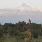Giraffe at Mount Kenya by Panayiotis Zavros