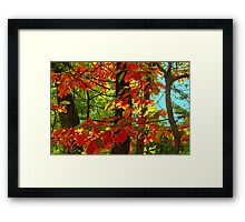 Early Touches of Autumn Framed Print