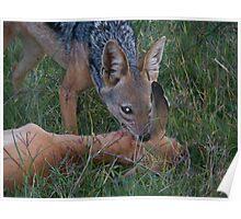 Jackal kills a young gazelle Poster