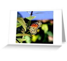 Another Monarch Greeting Card