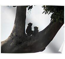 Babies monkeys Poster