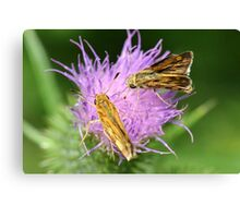 Skippers sharing Canvas Print