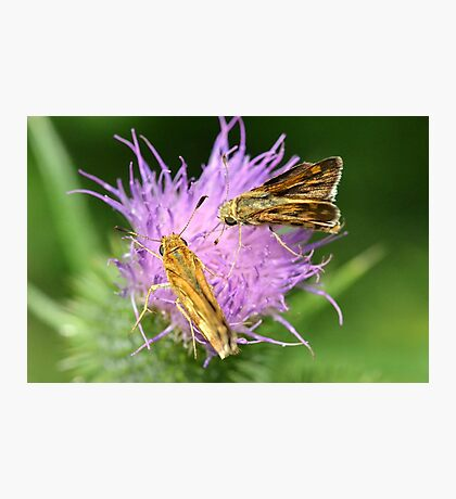 Skippers sharing Photographic Print