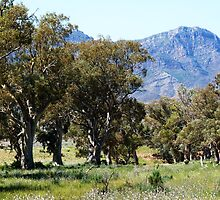 The Purple Beauty of the Flinders Ranges South Australia by Virginia  McGowan