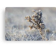Frost Bite Canvas Print