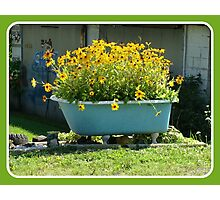 A Tub Full of Posies Photographic Print