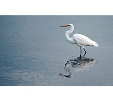 Egret reflections Photographic Print