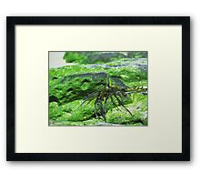 GREEN ROCKS! Framed Print