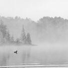 Loons in fog by Greg Schneider