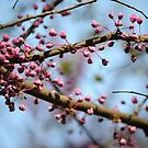 Bloom by Suzanne Gordan