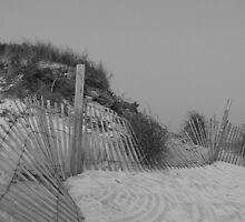 Assateague Island, MD, beach dune & fence by Lucy Albert